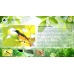 Biodiversity Discovery Kiosk Manager